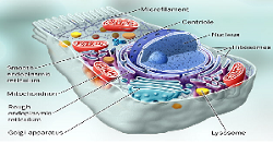 پاورپوینت تعاریف سلول، بافت، دستگاه، اندام و ...